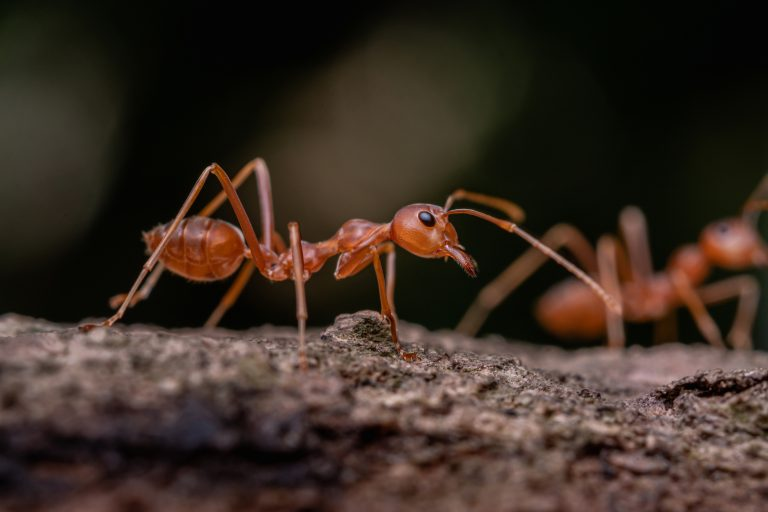 15 Ways To Get Rid Of Ants