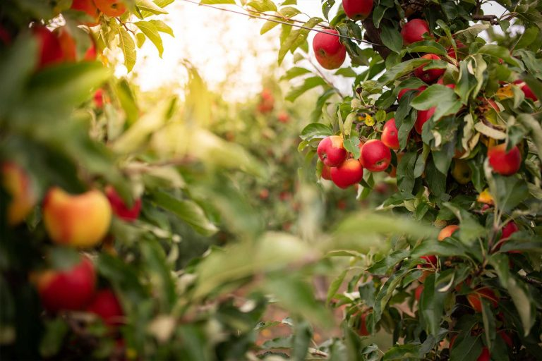 When To Spray Fruit Trees