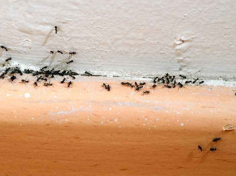 How to Get Rid of Ants in Winter