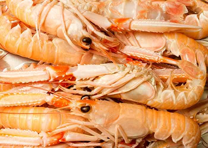 Are Shrimp Related to Cockroaches? What Are The Similarities and Differences?